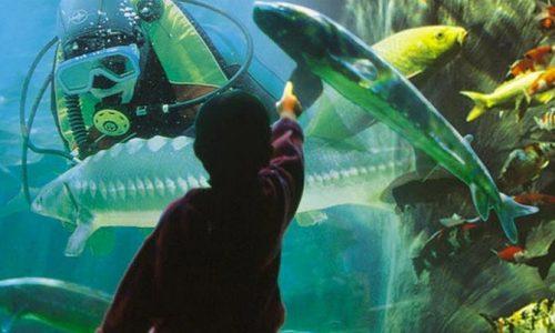 Dordogne Perigord: Aquarium du Perigord Noir in Le Bugue - attracties.