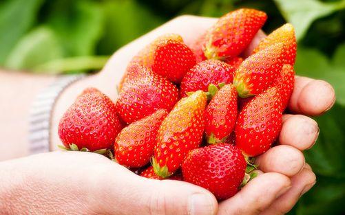 Dordogne Perigord: streekproducten - fraises aardbeien
