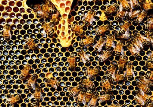 Bijenhouders - imkers in Dordogne Périgord