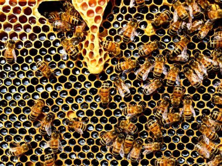 Nederlandse bijen overwinteren in Dordogne