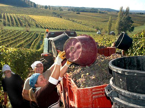 Dordogne: Routes des Vins Bergerac en Monbazillac