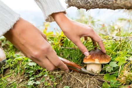 Dordogne Perigord paddenstoelen plukken1